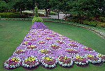 Gardens. / by Betsy Veazey