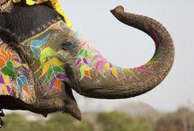 Farbenfroh: Das Holi Festival / Dieses Fest ist zu einem echten indischen Exportschlager geworden. Auf dem Subkontinent wird am 13. März der Frühling mit dem Holi-Festival begrüßt. Viele Feiernde in anderen Teilen der Welt bewerfen sich aber lieber später im Jahr mit dem farbigen Pulver. Wir zeigen, wo Holi gefeiert wird.