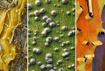 Arborealism / Trees