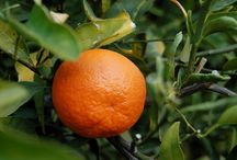 Inspiration ::: tangerine