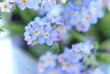 花 / 青い花が好き