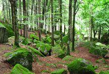 """Land Art in Valmasino - L'anima del Bosco - / """"L'anima del bosco, come quella dell'uomo, ha due occhi una è nel tempo, l'altro si affissa nell'eternità. Il dialogo è allora possibile sarà bello con-fondersi per poi, alla fine, orientarci"""". - Fiammetta Giugni, artista"""