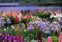 A természet kertje