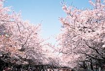 sakura_100 / mappleの日本さくら名所100選の桜写真