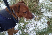 Wintery pics from our Tweeps