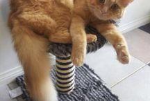 Cats / Cute photos