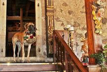 Dogs of Dellago / The reigning Queen of Schloss Korb is Sissi a two-year old, tiger striped, Great Dane who not only welcomes, but encourages fellow doggie guests.