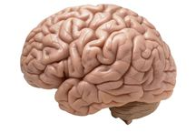 MEMORY AND IQ