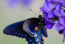 Vlinders / Teer en klein