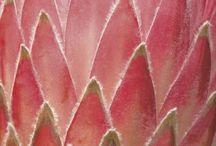 Botanica / Beautiful botanical wonders..