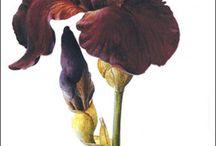 Art study: Flower / As the sun colors flowers, so does art color life. ~            John Lubbock