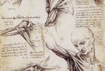 academic drawing / academic drawing & anatomy