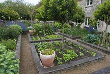 Gardening - organic food
