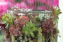 Succulents and Containers