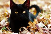 Black Cats...Not just for Halloween / Some people have a real fear of black cats but I think they are just adorable. They don't bring bad luck and are very loving. So here's some pics that I think are just too cute! / by Rianna Stone