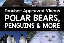 Classroom: Polar Regions / Arctic, Antarctica, Polar Regions