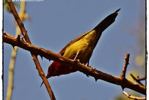 Birds Photography / Discover some of beautiful pics of Birds by Arvind Katoch. With these pictures, you can discover how beautiful birds in reality.  / by Arvind Katoch