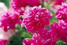 flores con aroma