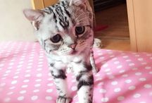 Lovely pets - Mascotas - / ¿Te encantan las mascotas? Disfruta con estos adorables animalitos / by enfemenino