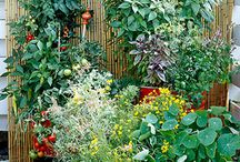 Garden / by Cay Hoburg