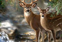 Art   ( Wildlife )
