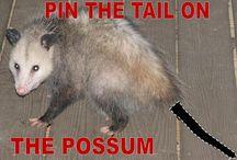 Possum Birthday