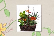 Tropical Foliage and Blooming Plants
