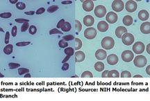 Stem Cell Discovery / stem cell, dna, genetics, regenerative medicine