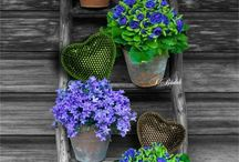 black and color flowers