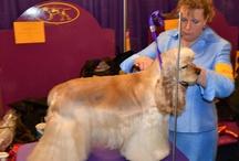 DogInSpot Hundefrisør / Jeg klipper og trimmer alle hunderaser både til hverdags og utstilling. Har 33 års erfaring som hundefrisør. Jeg holder til i Oslo, Majorstuen og du kan ringe meg på 94 14 21 12 for priser og bestilling av time.