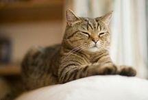 Pet tips / by Annette Bondy
