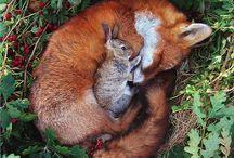 Animals n' Such. / by Catherine Ward