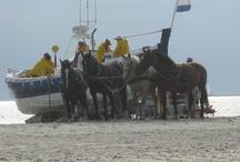 de waddeneilanden / Regelmatige bezoeker van Texel en Ameland. Opladen, inpiratie op doen, lekker weg met mijn gezin, natuur, rust en ruimte.