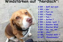 Norddeutsch
