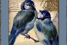 bird decoupage/ kuşlarrr...