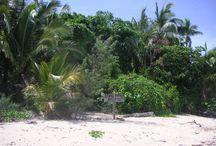 Bedarra Island - Exploring and beachcombing on and around  nearby beaches. / Beachcombing on wonderful tropical beaches on Bedarra Island and surrounds.