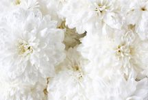 -- White --