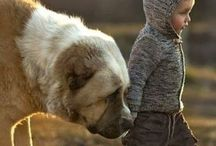 Little friends / Animals