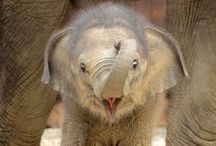 Elephants - I just love them / by Ros Hollaardt