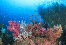 Soft corals in the sea / R・H氏の作品