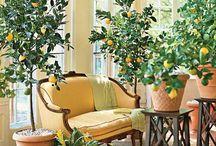 INTERIOR PLANTS. / Incorporating plants in interiors