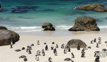 Afrique du Sud - Voyage de Noces / Pour notre voyage de noces, nous sommes partis près de 3 semaines à la découverte de l'Afrique du Sud. Un pays vraiment extraordinaire et certainement l'un de nos plus beau voyage !