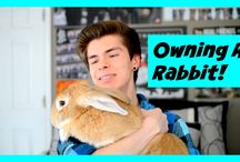 Rabbit Care and Rabbit Rescue Issues