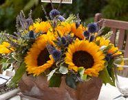 Weddig sunflowerg