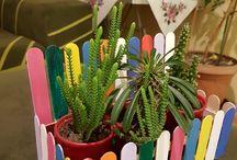 kaktus bahcesi