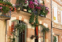 window boxes and gardening / by Amy Friedman