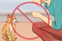 Cómo entrenar a tu gato
