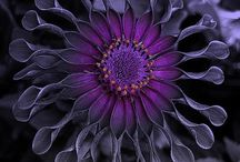 Color: Purple / by Customizabooks