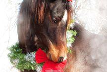 Новогодние кони