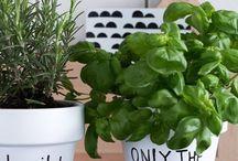 Fina växter